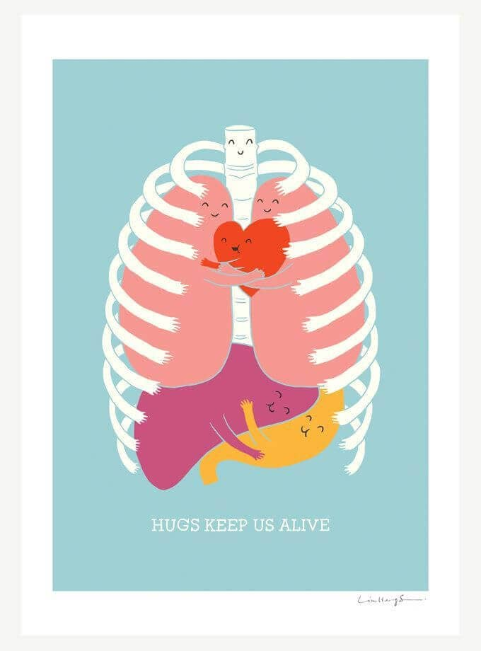 Internal Organs Aren't Stuck Together, They're Hugging