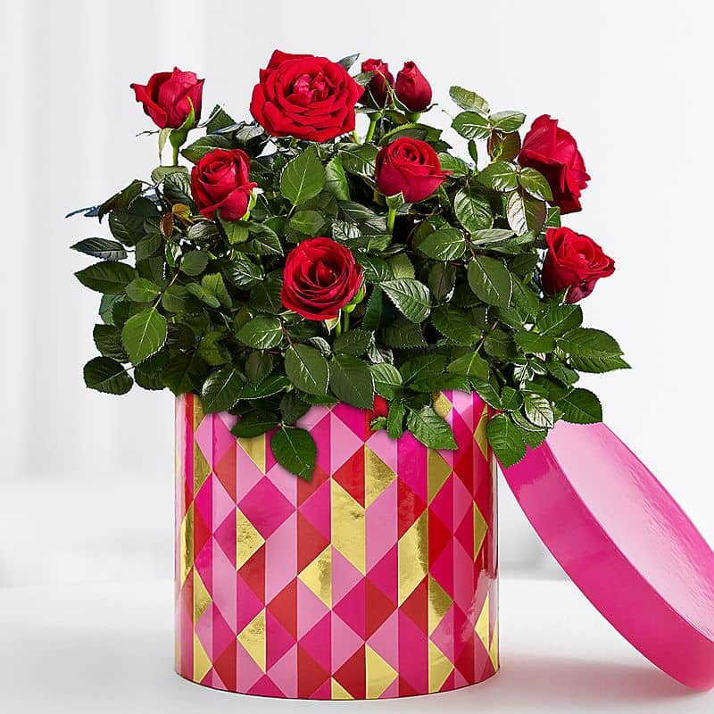 Quirky Rose Bush in a Box