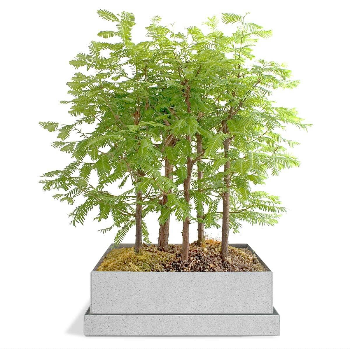 Bonsai Tree Gift Set